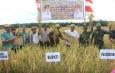 Bupati: Hasil Petani Meningkat, Dari 3,8 Ton Menjadi 7,2 Ton per Hektarnya